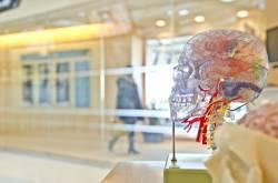 東大教授「脳を半分切って機械に繋げ、機械に意識が宿ると証明する。自分が最初の被験者になる」