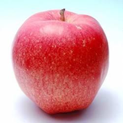 【画像】発達障害の女の子が林檎を見て連想することが悲しすぎる