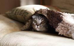 【悲報】女さん「猫が腎不全になった!チュールの塩分が高すぎ!」→獣医「デマだぞ」→女「私悪くない!」