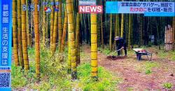 【朗報】茨城県のサバゲーフィールド、営業自粛で、仕方なく敷地内のタケノコを一箱3000円で売った結果www