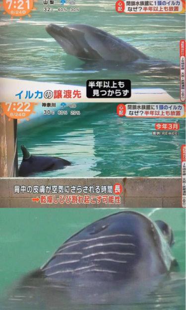 【悲報】閉館した水族館に2年間も放置され鬱病になったイルカさん、死去