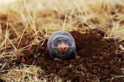 【閲覧注意】農家なら誰でも知ってるモグラの殺し方がエグすぎる