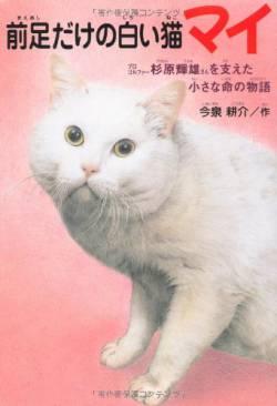 【pickup】【悲報】毛並みフサフサの捨て猫を拾ったYouTuber女さん、デビュー失敗で即引退へ