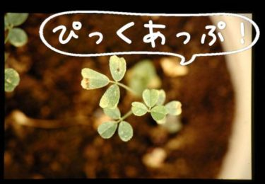 "【pickup】ワイ、""不良リス""を超える日本語プリントにはまだ出会っていない。"
