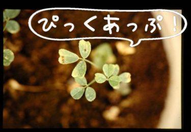 【pickup】花江さん「先日、双子の女の子が産まれました。」【よかおめ】