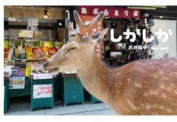 奈良の鹿をなめてはいけない。