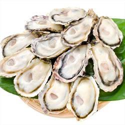 【悲報】東京湾の下水対策に投入された牡蠣、増えすぎて東京都を困らせるw