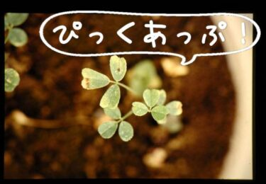 【HotTweets】香川県「幸福追求権は基本的人権とは言えない」